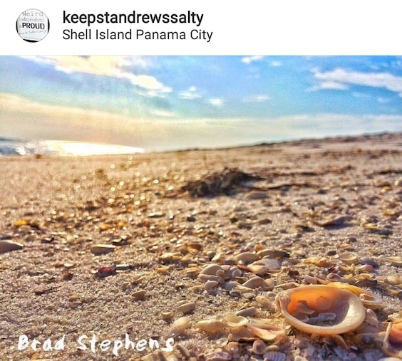 10 Best Shelling Beaches in Florida » Sand Dollar Shelling